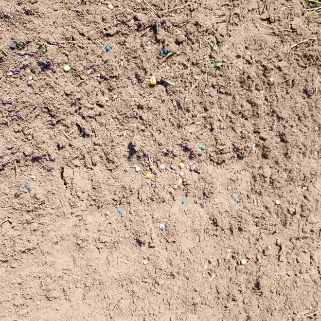 Detailansicht Saat auf Boden